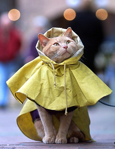 the cat in the rain How is a lost indoor-only cat different from other missing pets if your lost pet is an indoor-only, very timid, or possibly sick.