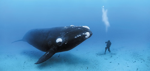 This is how you photograph a whale...