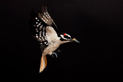 Woodpecker - Paper Sculpture by Diana Beltran Herrera