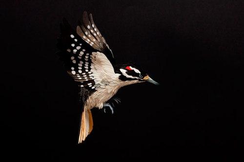 Woodpecker - Paper Sculpture by Diana Beltran Herrera