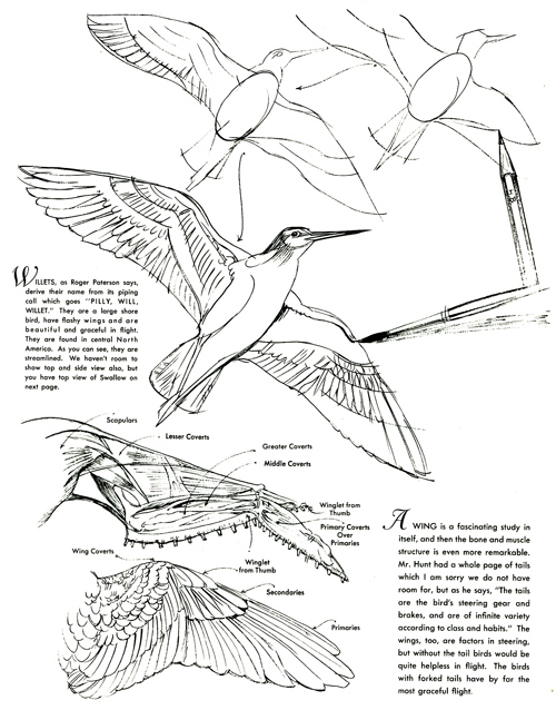 Lynn Bogue Hunt-How to Draw and Paint Birds-pg 14