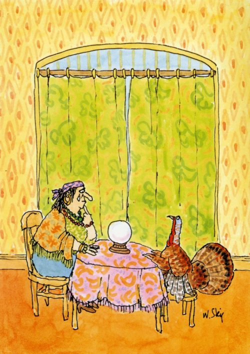 steig turkey