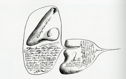 steinberg nose