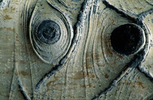 knotted-aspen-bark-703029-sw