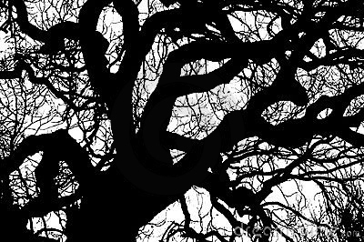 tree-branches-silhouette-14238037
