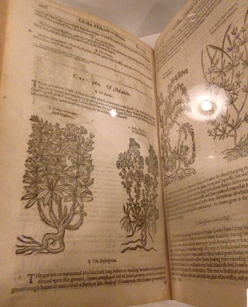 W Morris-herbal