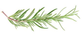 Rosemary sprig