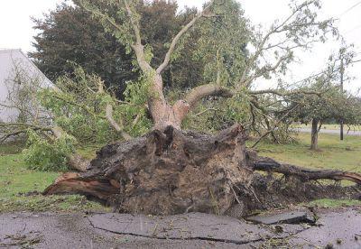 tree rootball 2