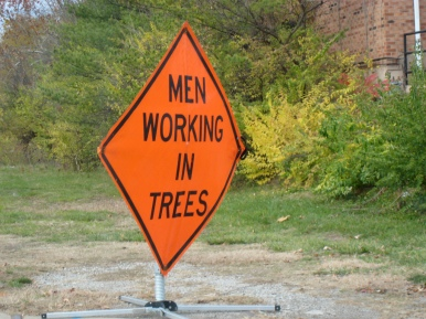 men working in trees