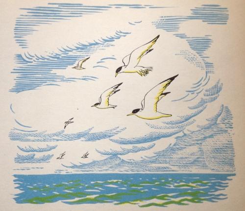 G White-Birds Flying