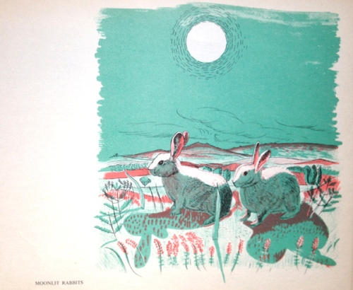 G White-Moonlit Rabbits-image
