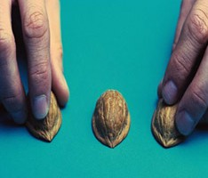 three walnut shells