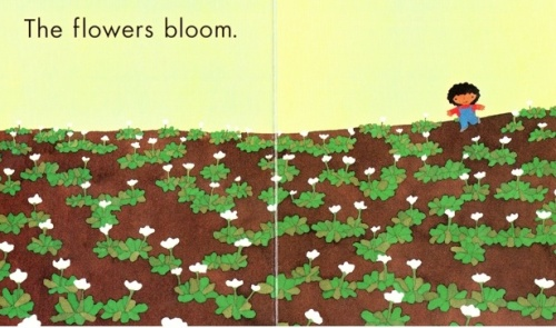 the-flowers-bloom